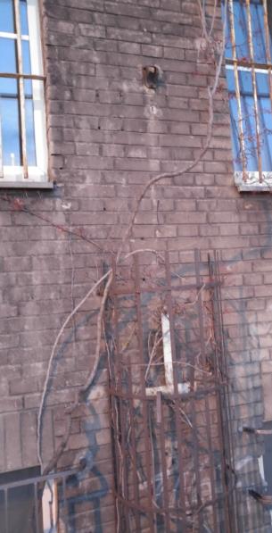 http://www.kolejkamarecka.pun.pl/_fora/kolejkamarecka/gallery/103_1509732738.jpg