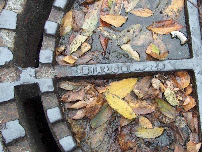 http://www.kolejkamarecka.pun.pl/_fora/kolejkamarecka/gallery/2_1254734348.jpg