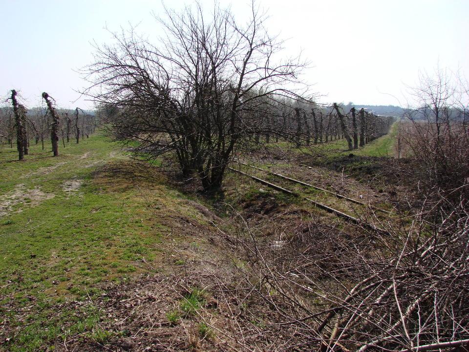 http://www.kolejkamarecka.pun.pl/_fora/kolejkamarecka/gallery/454_1523899788.jpg