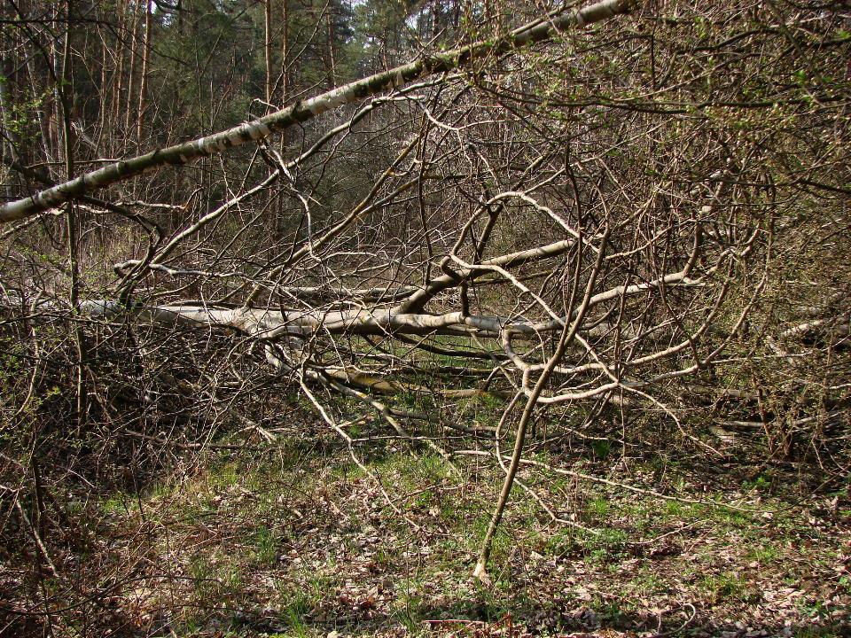 http://www.kolejkamarecka.pun.pl/_fora/kolejkamarecka/gallery/454_1523903886.jpg