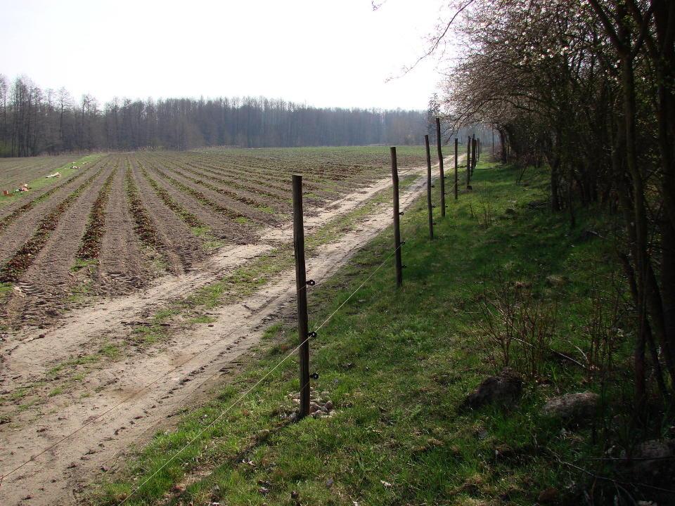 http://www.kolejkamarecka.pun.pl/_fora/kolejkamarecka/gallery/454_1523903975.jpg