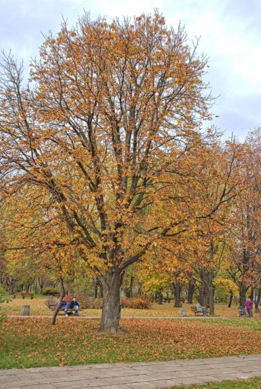 http://www.kolejkamarecka.pun.pl/_fora/kolejkamarecka/gallery/81_1383081948.jpg