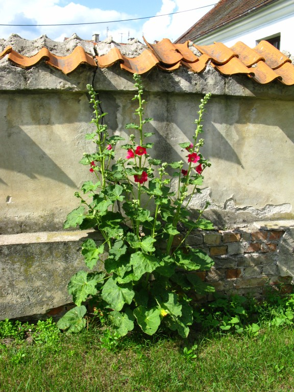 http://www.kolejkamarecka.pun.pl/_fora/kolejkamarecka/gallery/91_1373213471.jpg